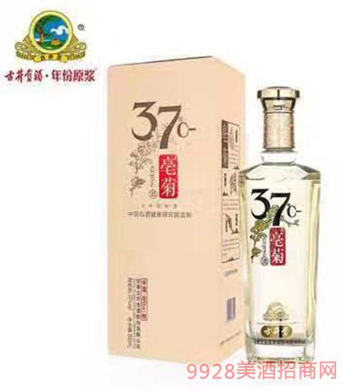 古井�豪菊酒37度500ml