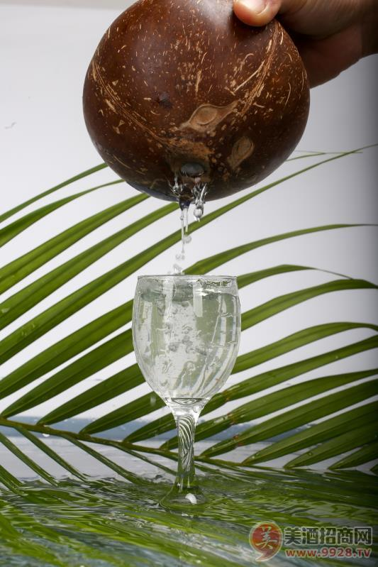 白酒 椰子酒 椰子里的美酒