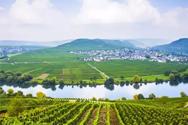 影响葡萄酒风格的主要风土因素