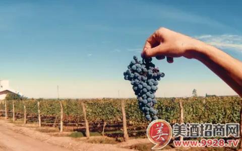 【酒知识】Mendoza产区的土壤简述