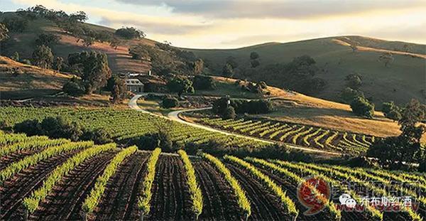 乔布斯澳洲圣者干红葡萄酒