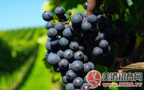 葡萄酒里的香叶醇是什么?