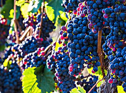 古人喝葡萄酒用什么杯子?