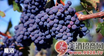 酿葡萄酒的方法