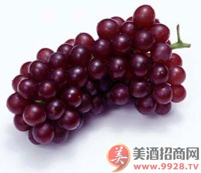详细葡萄酒酿制方法及步骤