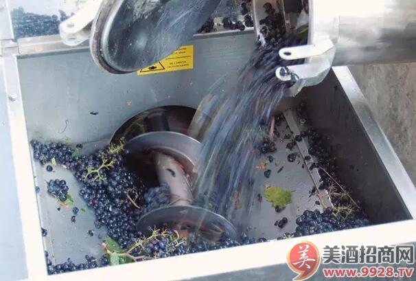 红葡萄酒的酿造步骤 -中国美酒招商网【www.9928.tv】
