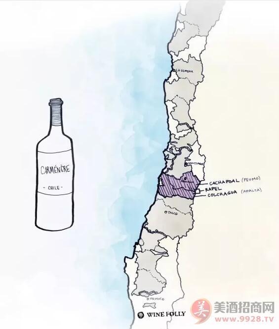 酿酒原料:智利的佳美娜