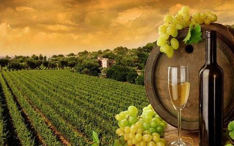 澳洲红酒品牌排名大全