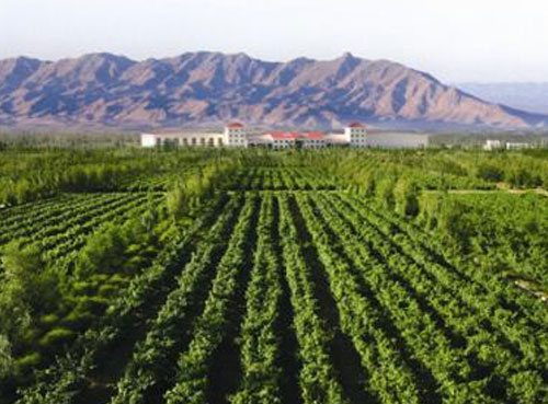 """""""宁夏葡萄产业发展局负责人介绍,贺兰山东麓产区葡萄酒的知名度在世界"""