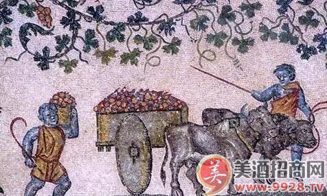 悠久的葡萄整形历史