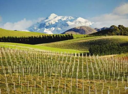 新西兰葡萄酒对美国的出口额超过了5亿美元