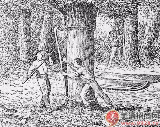 制作软木塞的橡树