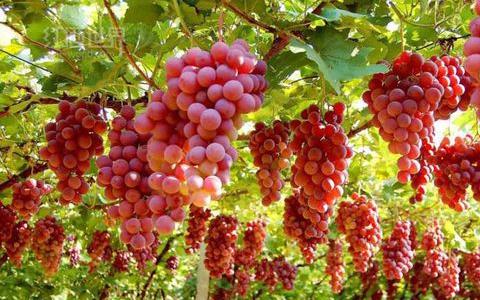 法国葡萄酒产区博若莱大师班降临珠海