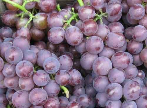 上半年蓬莱葡萄酒出口值上涨180.8%
