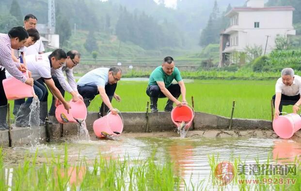 泸州老窖股份有限公司委、董事长刘淼带头将优质鱼苗放入乌蒙山区贫困村龙山镇向田村的农田