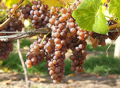 澳大利亚召回含有未申报过敏原的葡萄酒