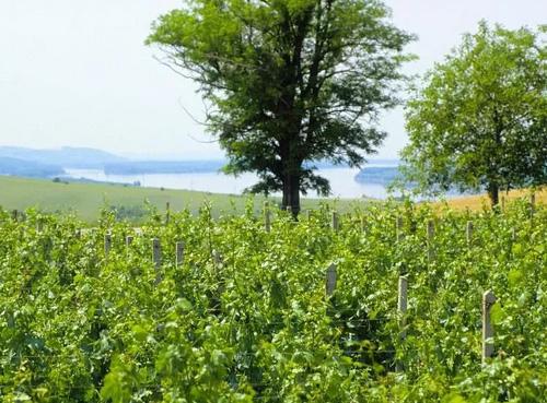 保加利亚、罗马尼亚、摩尔多瓦葡萄酒开始复苏!