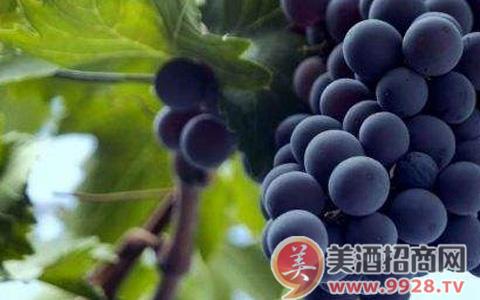 法国朗格多克葡萄酒产区:风景如画