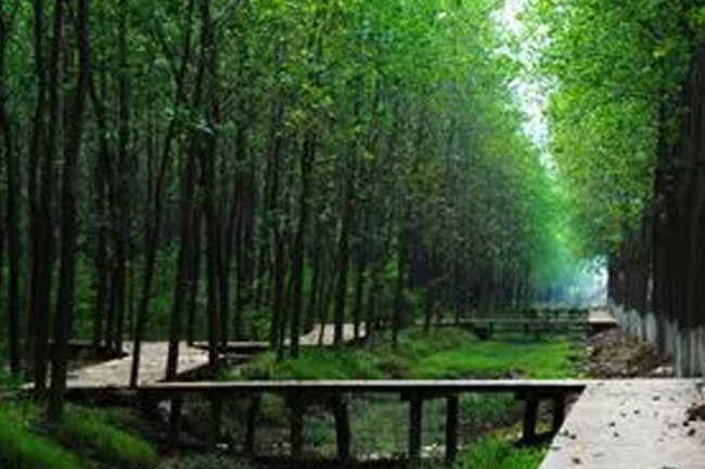 合肥滨湖湿地森林公园