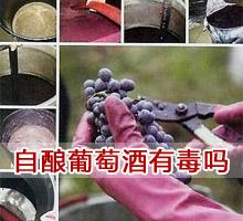 自酿葡萄酒有毒吗