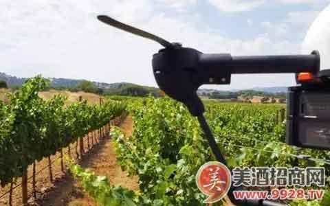无人机帮助葡萄园种出好葡萄