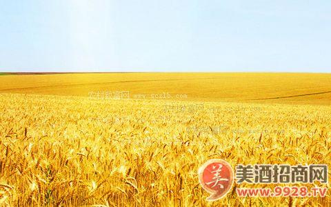 欧盟大麦出口许可证发放量增加