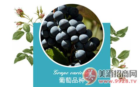 莱蔻玫瑰西拉红葡萄酒,象征沉稳和智慧