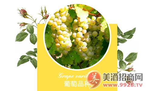 莱蔻玫瑰雷司 令白葡萄酒,象征纯真与和平