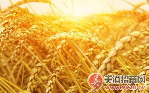 俄罗斯大麦价格上涨至每吨201.5美元