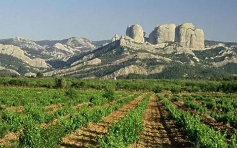 西班牙葡萄酒产区知识点之加泰罗尼亚