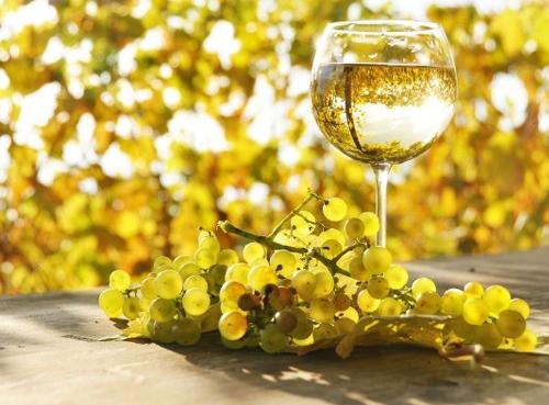 美食与酒:智利葡萄酒长相思