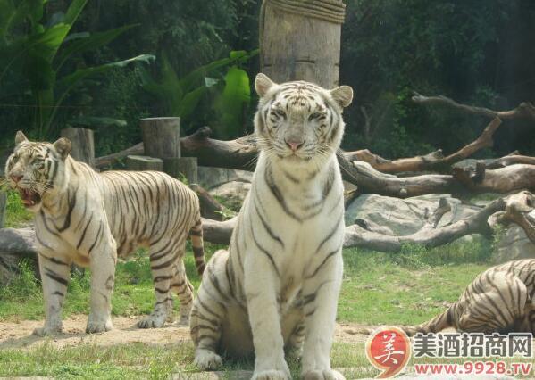 广州的旅游景点之长隆野生动物世界,长隆野生动物世界