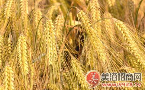 中国2017年大麦进出口报告