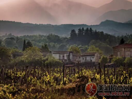 探索火山葡萄酒的秘密