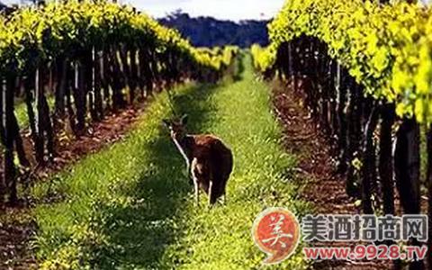 澳大利亞葡萄酒推薦:洛貝森莊園干紅葡萄酒