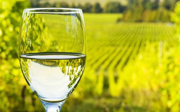 清爽的白葡萄酒该怎么选择?