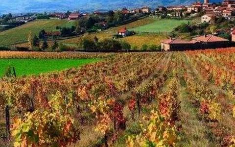法国葡萄酒产区知识点之博若莱