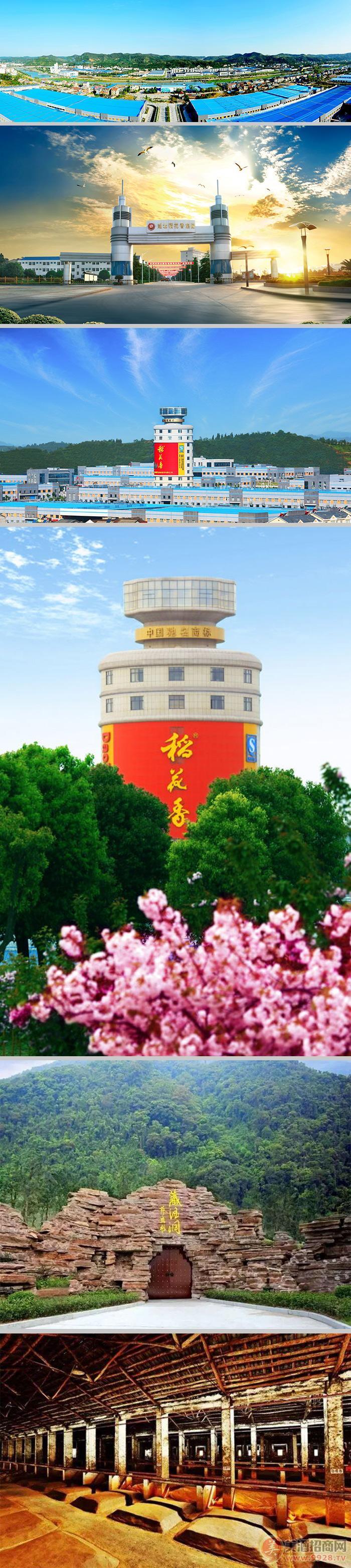 湖北稻花香集团苦荞酒事业部