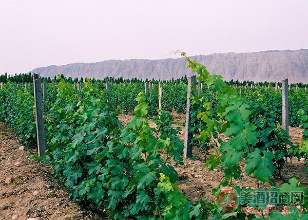 乡都葡萄酒