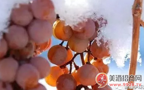 新疆伊珠葡萄酒怎么样?