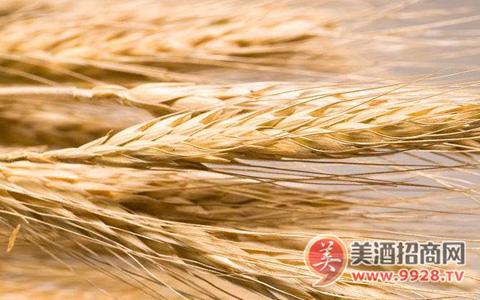 截至2月17日欧盟大麦出口量同比减少20%