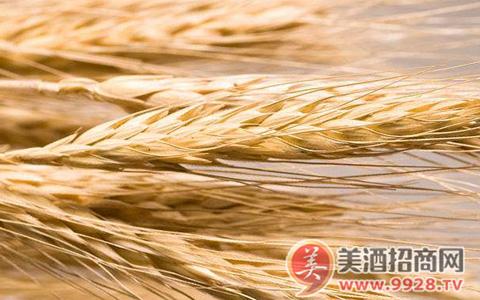 截至3月3日欧盟大麦进口许可证发放量减少70%