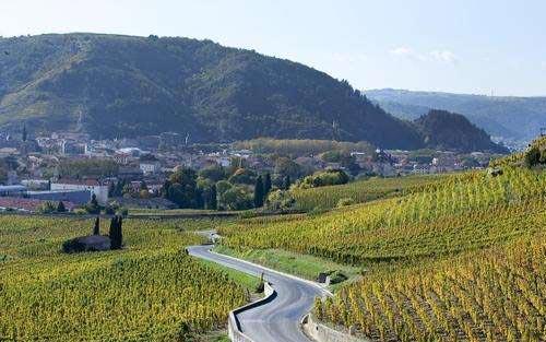 罗讷河谷的葡萄种植历史和现状