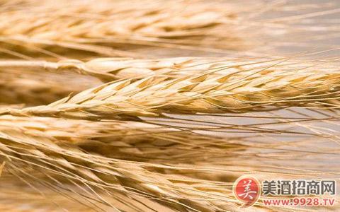 截至7月21日欧盟发放大麦进口许可证提高121%