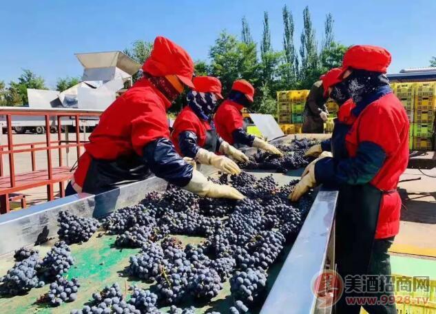沙漠葡萄酒、自然酒品类,小产区如何做大市场?