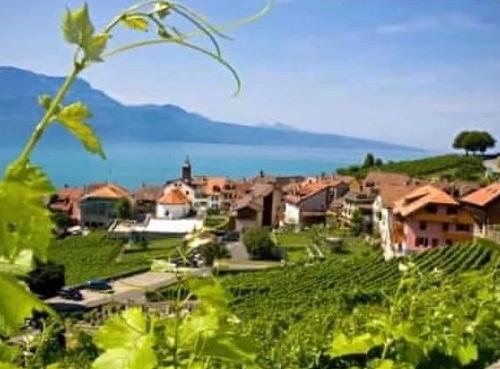 英国《卫报》:全球变暖2℃或导致部分酿酒葡萄失去56%的种植土地