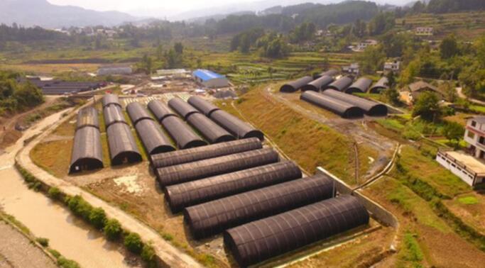 茅台集团援建的三桥镇食用菌产业扶贫示范园
