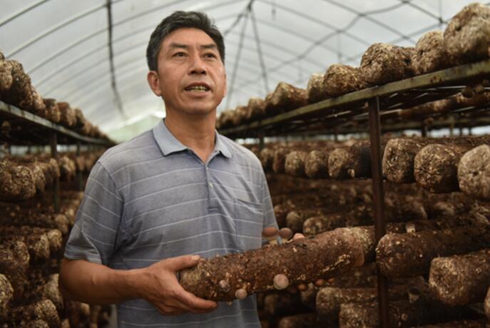 河口镇梅江村村民张文柳拥有2个食用菌大棚,生活过得有滋有味。
