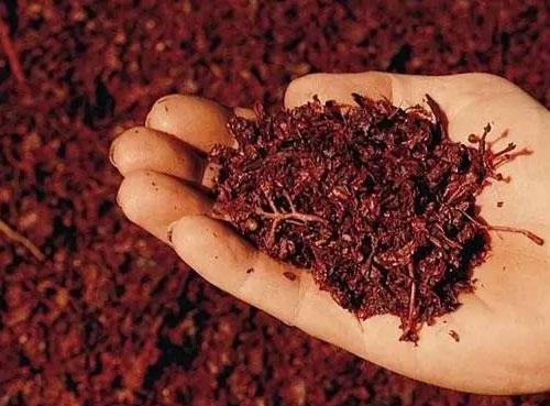 葡萄酒渣被用于制造��燃料